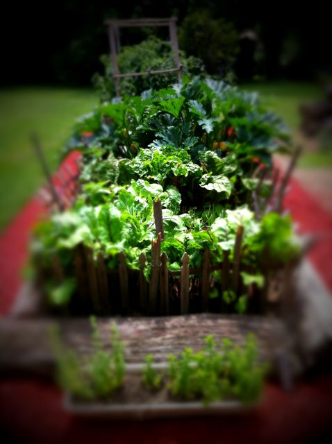 Day 145 - My Garden Runneth Over - Kevyn Bashore's iPhone Photo of the Day - Tilt Shift Gen